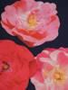 Sukienka wyjściowa, rozkloszowana kreacja w kwiatowym wzorze 27122